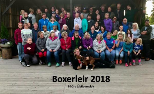 Boxerleir 2018